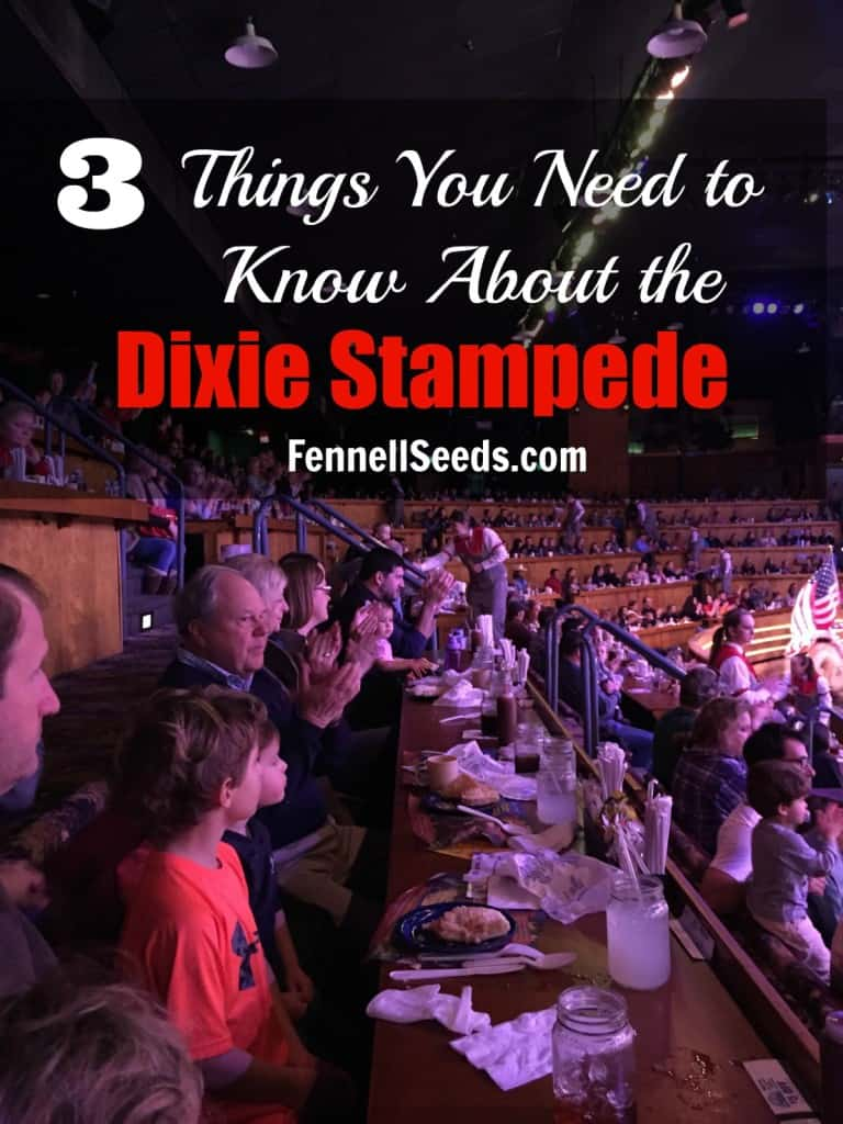 3 Things You Need To Know About The Dixie Stampede Show